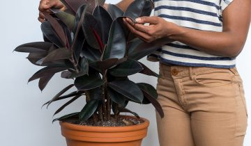 5 Easy Houseplants You (Probably) Won't Kill